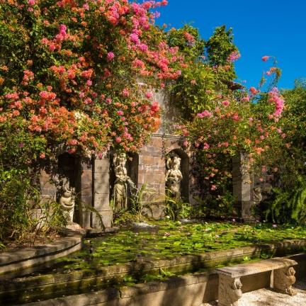 Mahogany-Hill-Lily-Pond